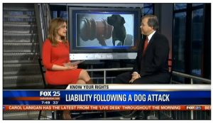 Our attorney discussing Massachusetts dog bite law with Fox 25 TV in Boston