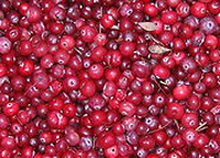 cranberries_web.jpg