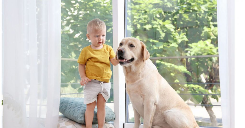 Child near a dog, a delicate situation because dogs cause many severe and fatal injuries to children in Massachusetts.